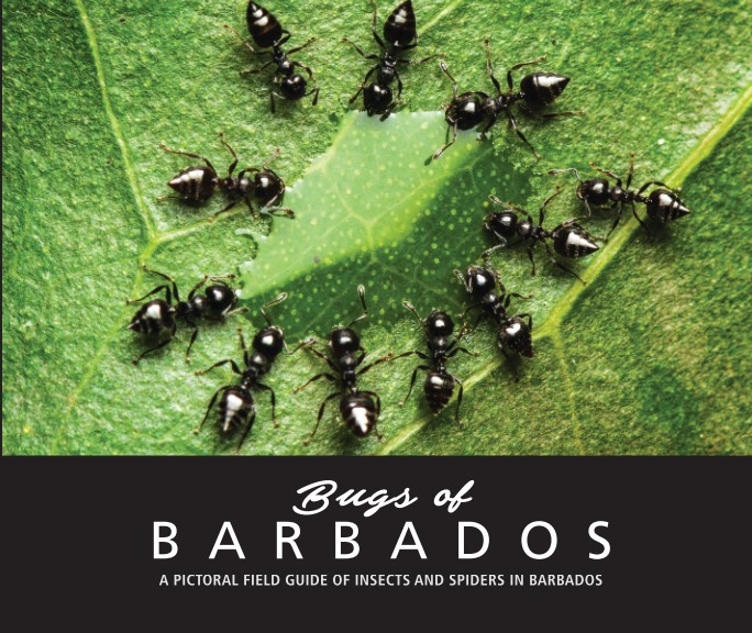 Bugs of Barbados - Complete Book